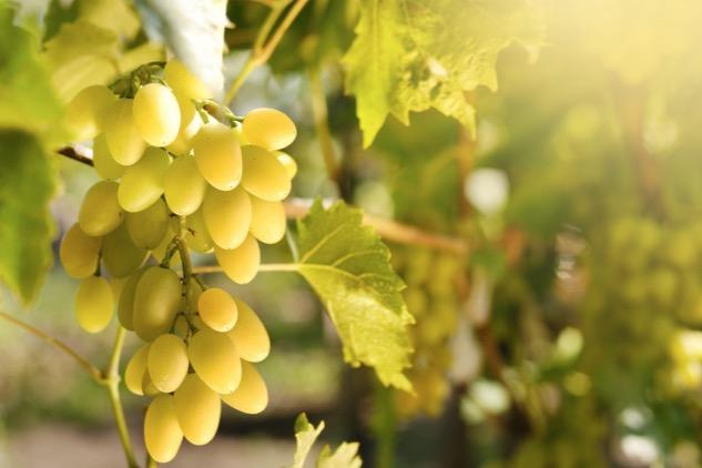 アサンブラージュって何?メリットと使用されるブドウの種類