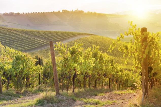 スペイン産のリーズナブルなスパークリングワイン「カバ」を楽しむ