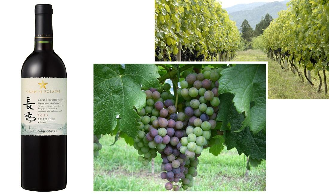 20歳の新成人におすすめしたい赤ワイン、グランポレール 長野古里ぶどう園メルロー