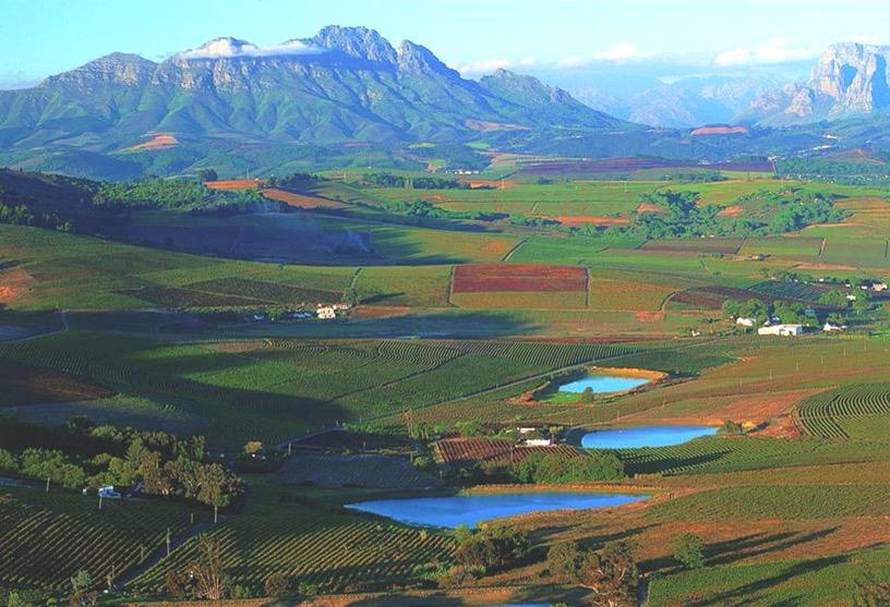 南アフリカワイン「ディステル」のワイン畑
