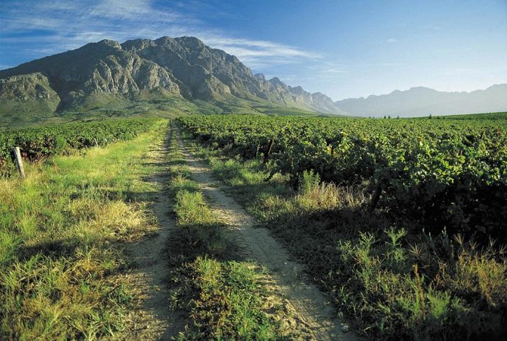 ディステルのブドウ畑と山