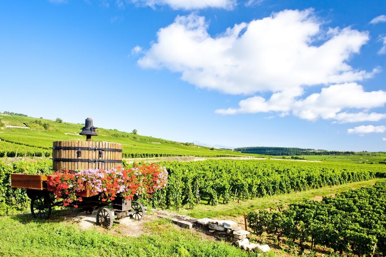 本格派ワインを味わうならフランスワイン!フランスワインの特長について