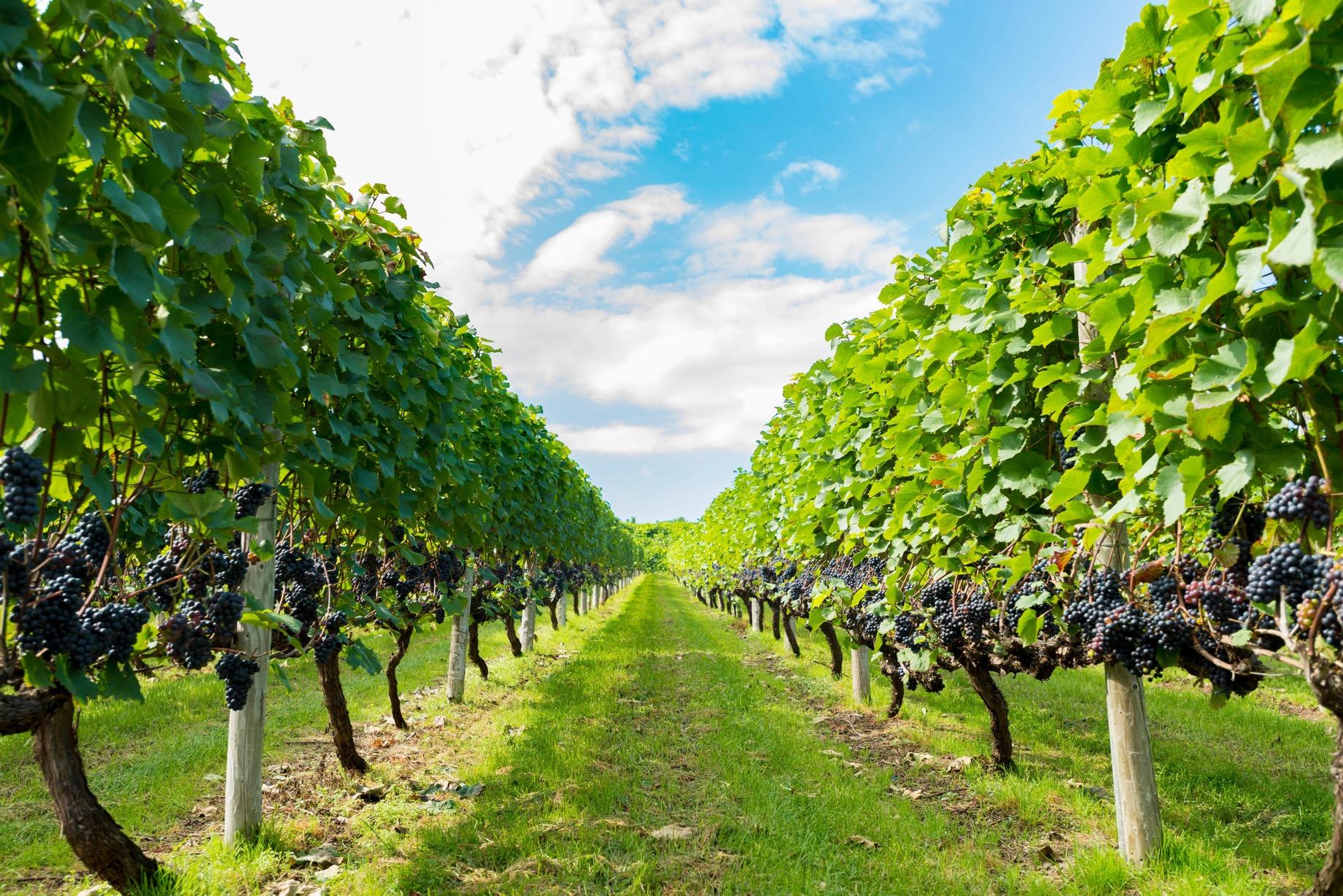 今年はワインでアクティブなGWを過ごしてみては