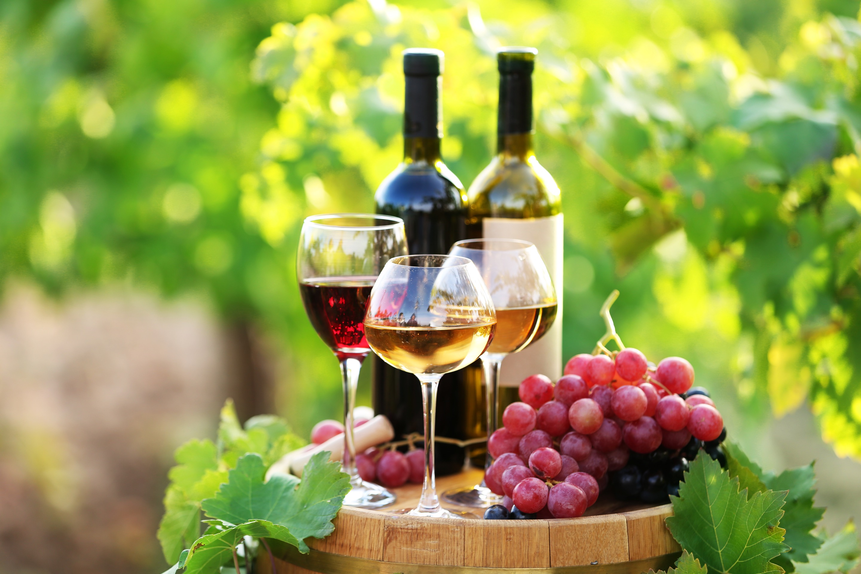 オーガニックワインとビオワインの違い