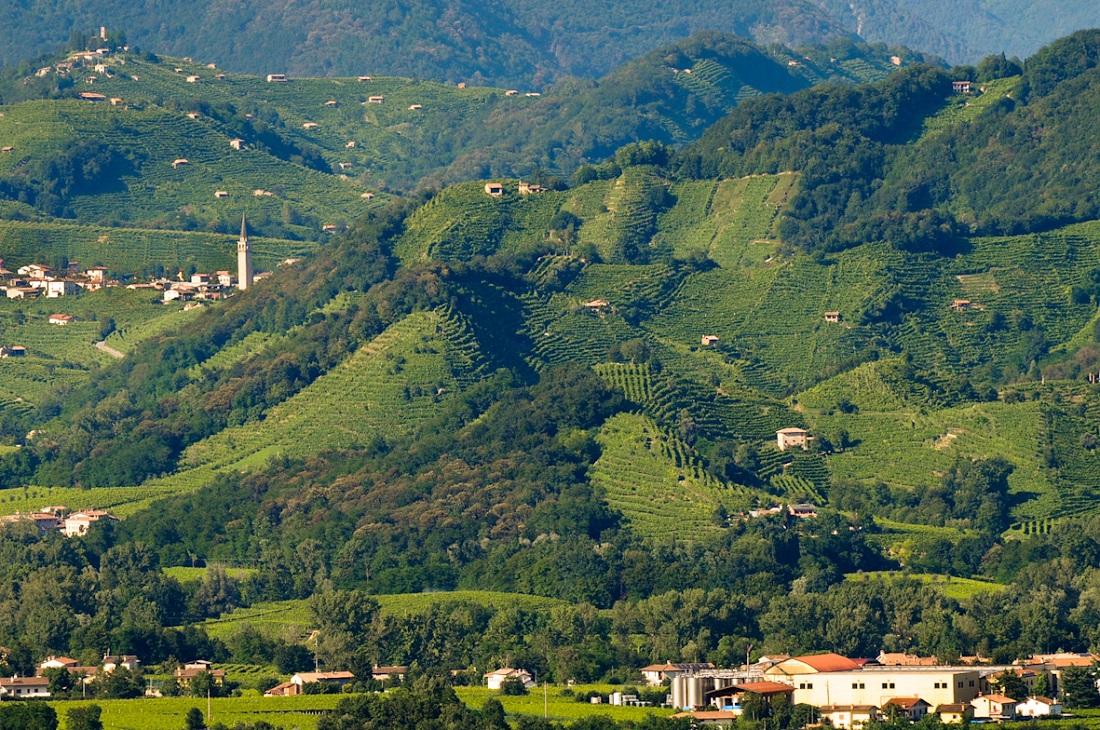 2019年世界遺産に登録されたヴァルドッビアーデネ・コネリアーノ地区のワイン畑