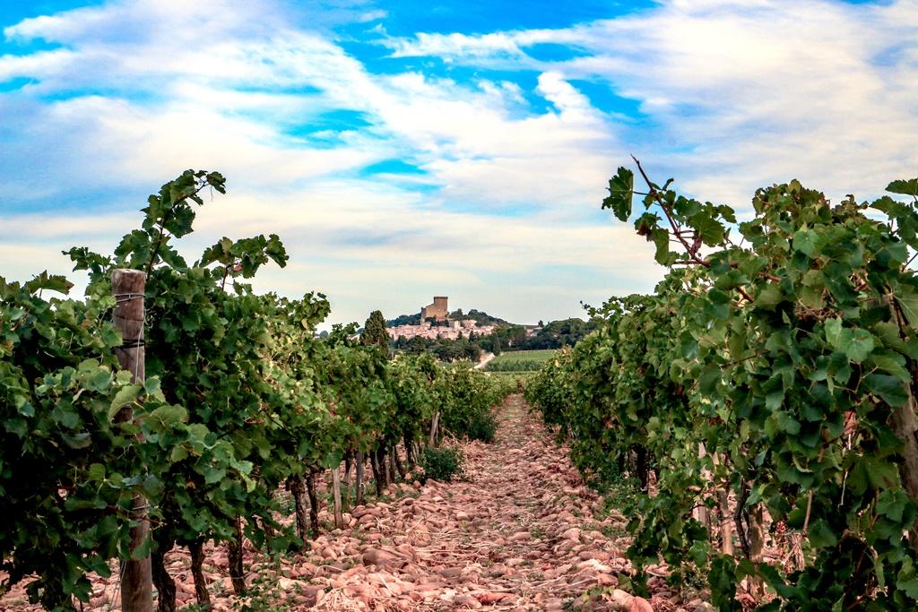 ローヌワインは北と南で魅力が違う?おすすめのワイン情報