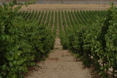 スペインワインを語るならマルケス・デ・リスカル!