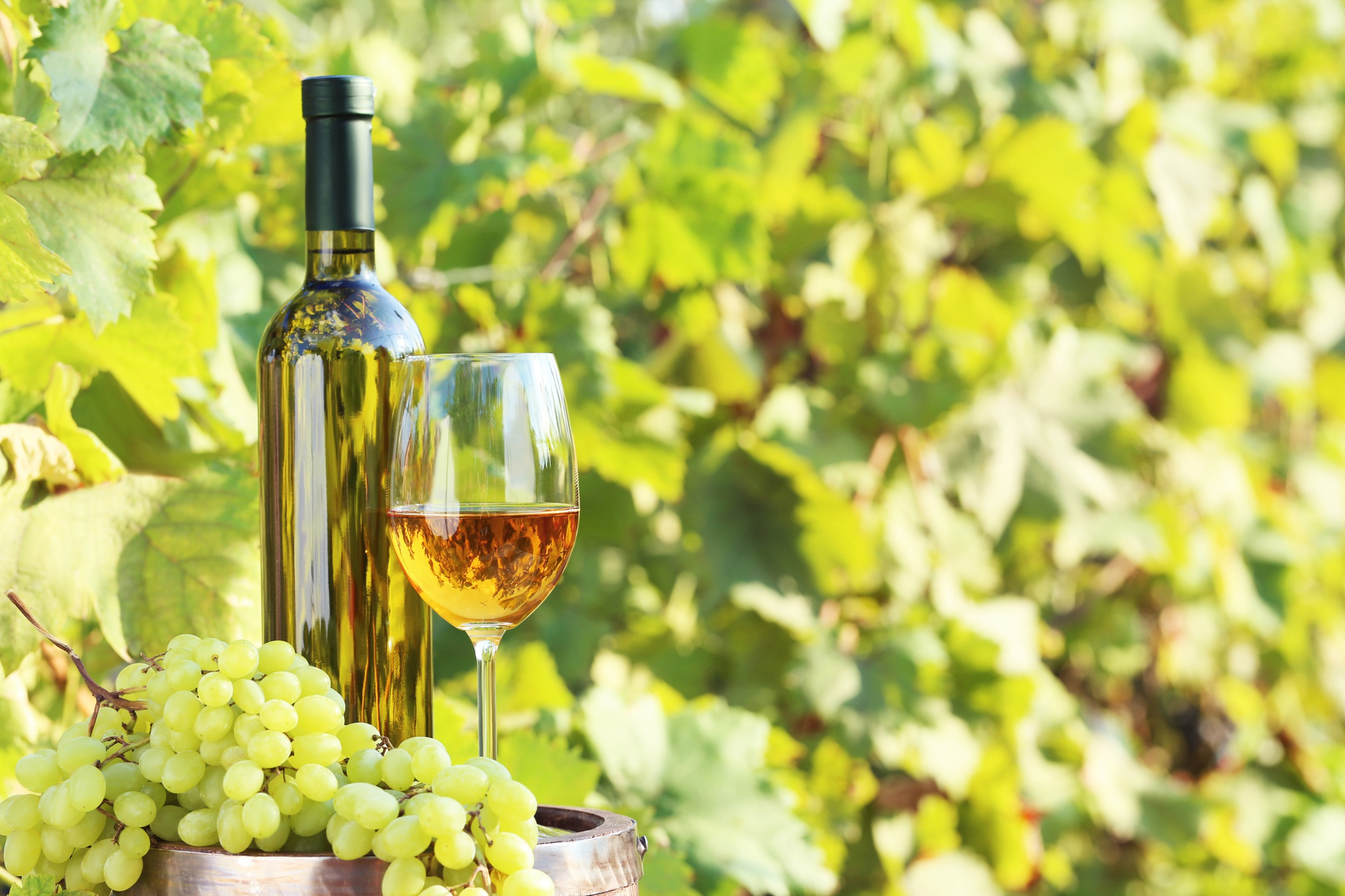 アメリカを代表するワシントンワインの魅力