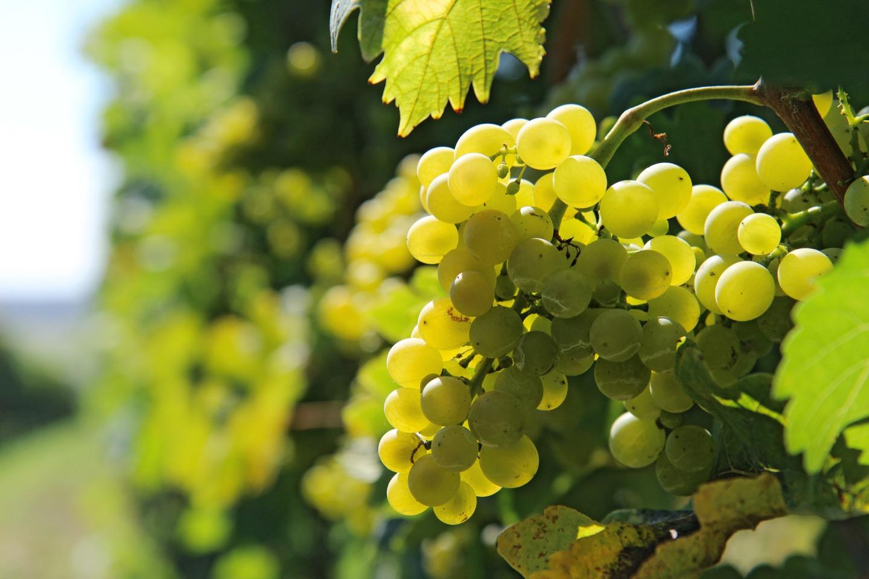 小樽仕込みで造られた甲州ワインも美味しいです