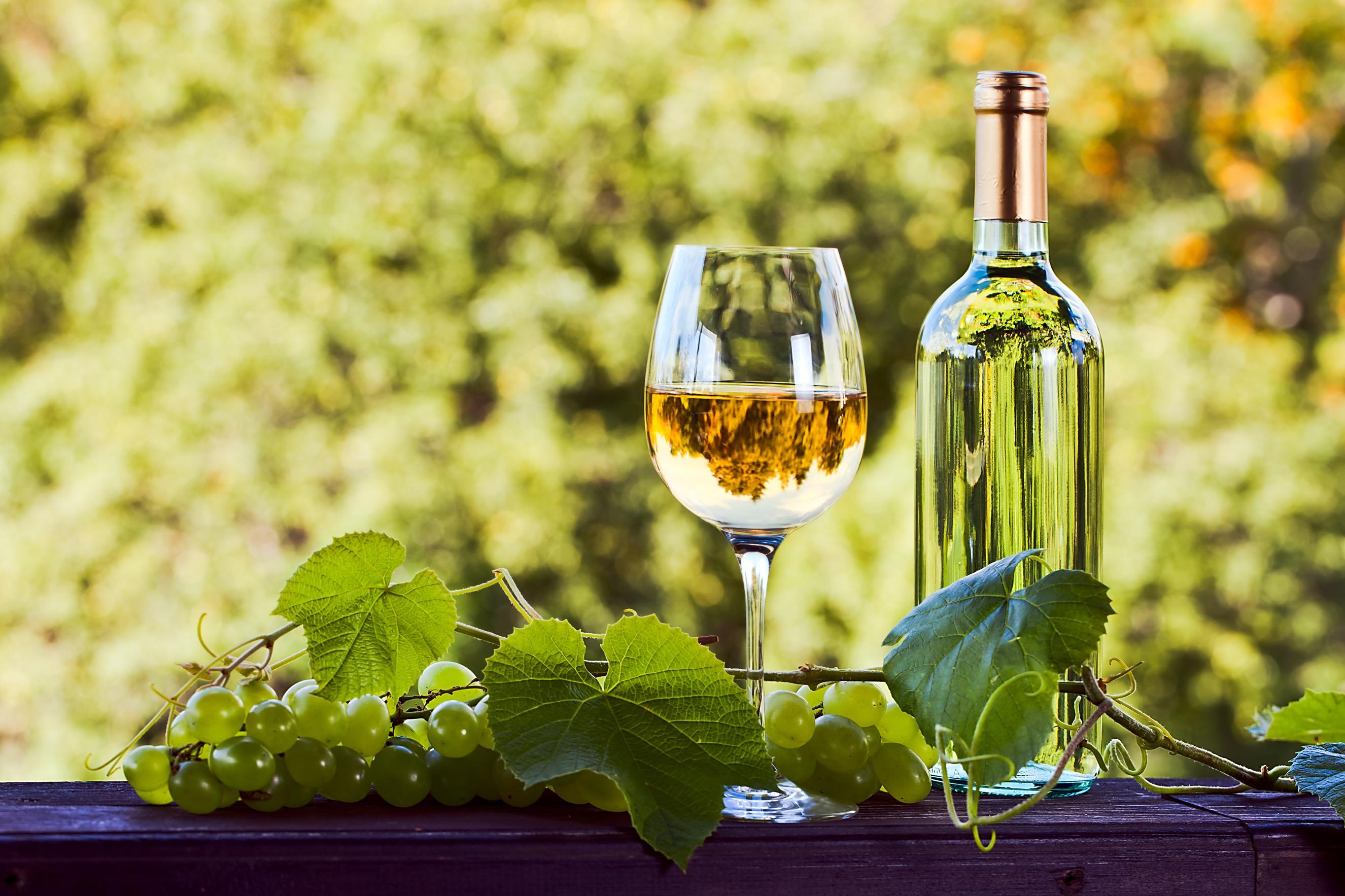 ドイツで愛される白ワイン『カッツ』の魅力
