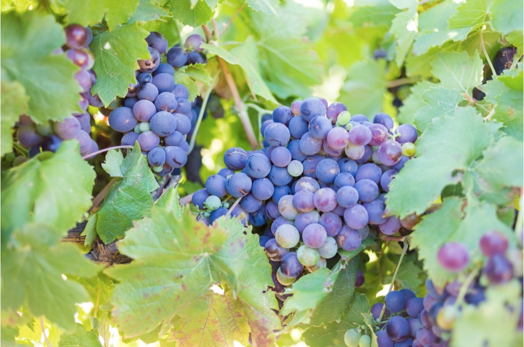 ワイン初心者が知っておきたいワインの基礎知識