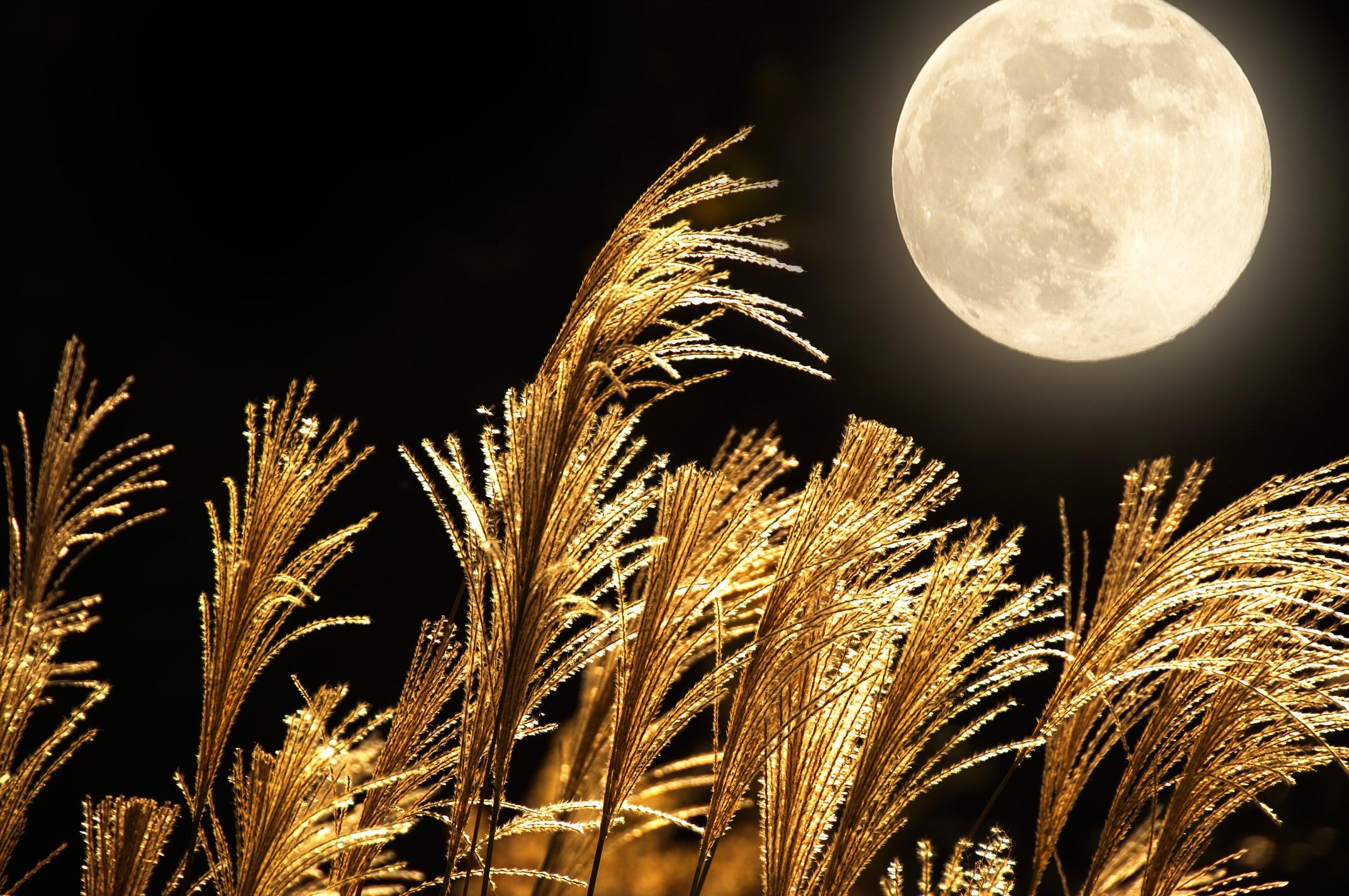 ワインを片手にお月見を楽しもう!お月見の由来やおすすめの楽しみ方をご紹介