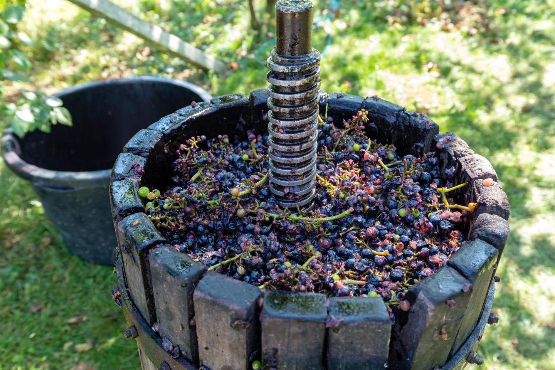 旧世界ワインとは