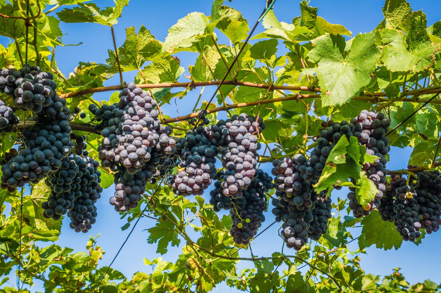ワインの価値は値段の違いで決まるの?