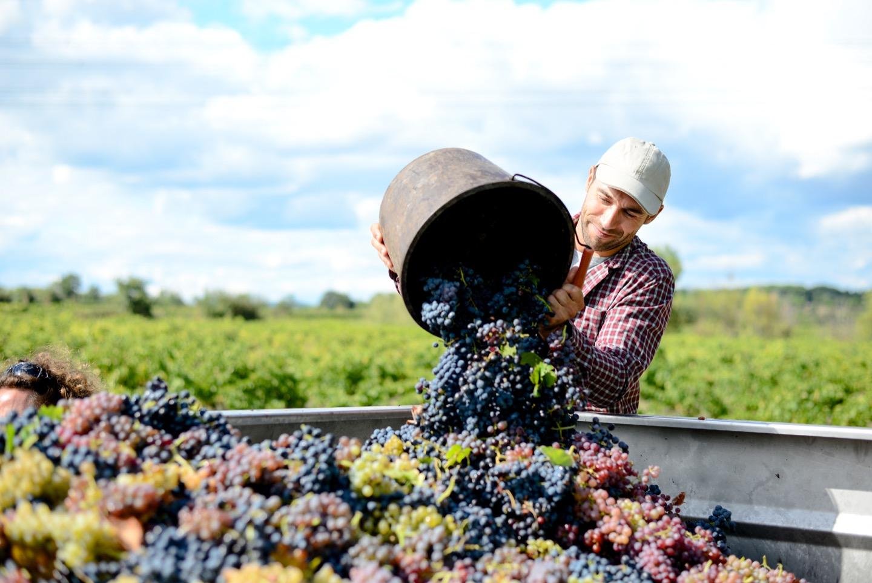スパークリングワインの製法を知る