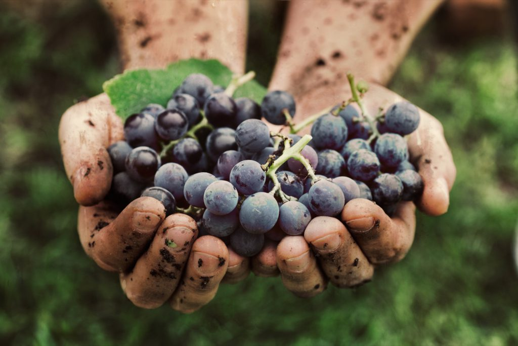 ビオマニア<オーガニック>でオーガニックワインの魅力をもっと楽しもう