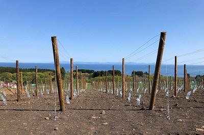 3番目の自社畑「グランポレール北海道北斗ヴィンヤード」植樹式