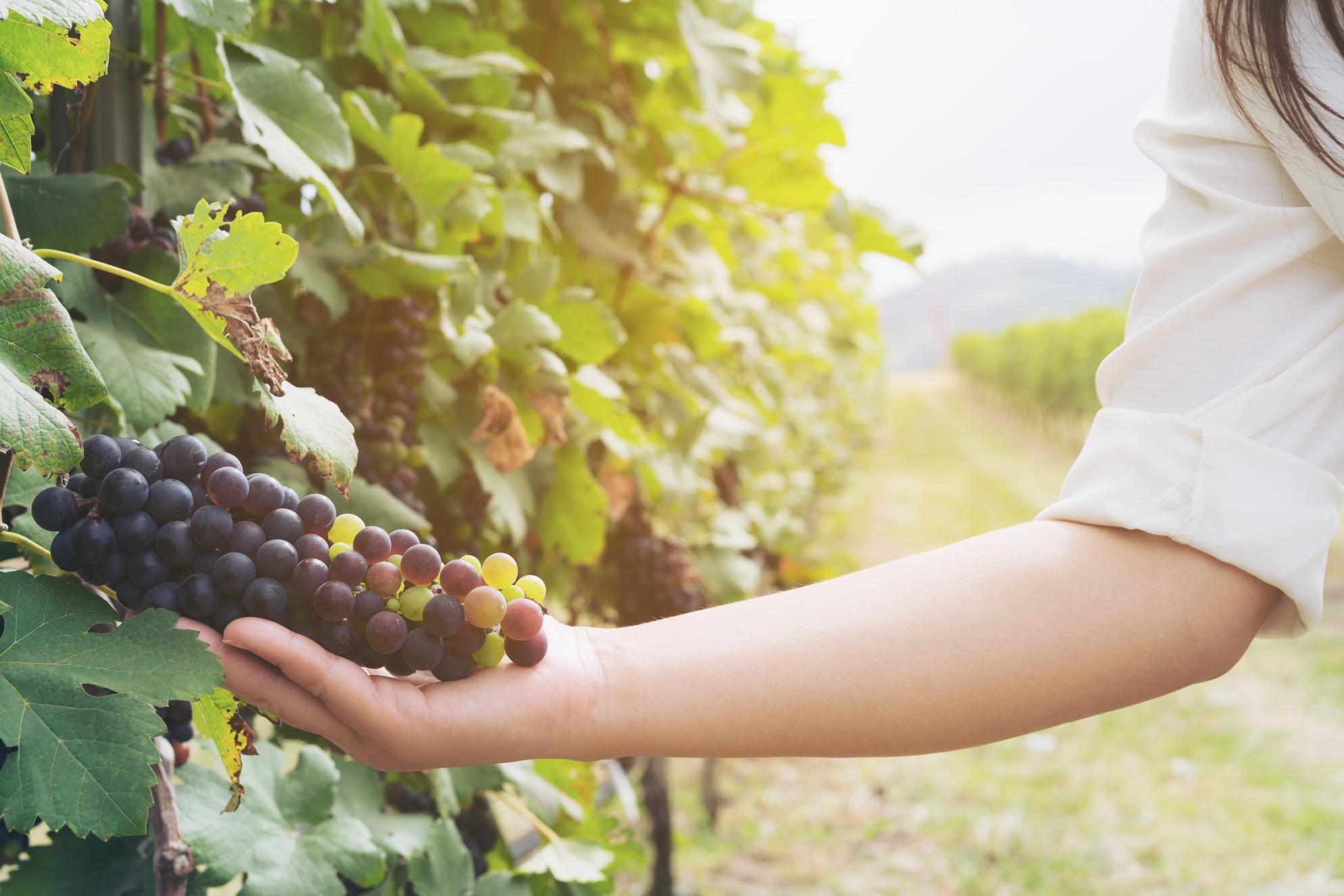 日本ワインについて紹介