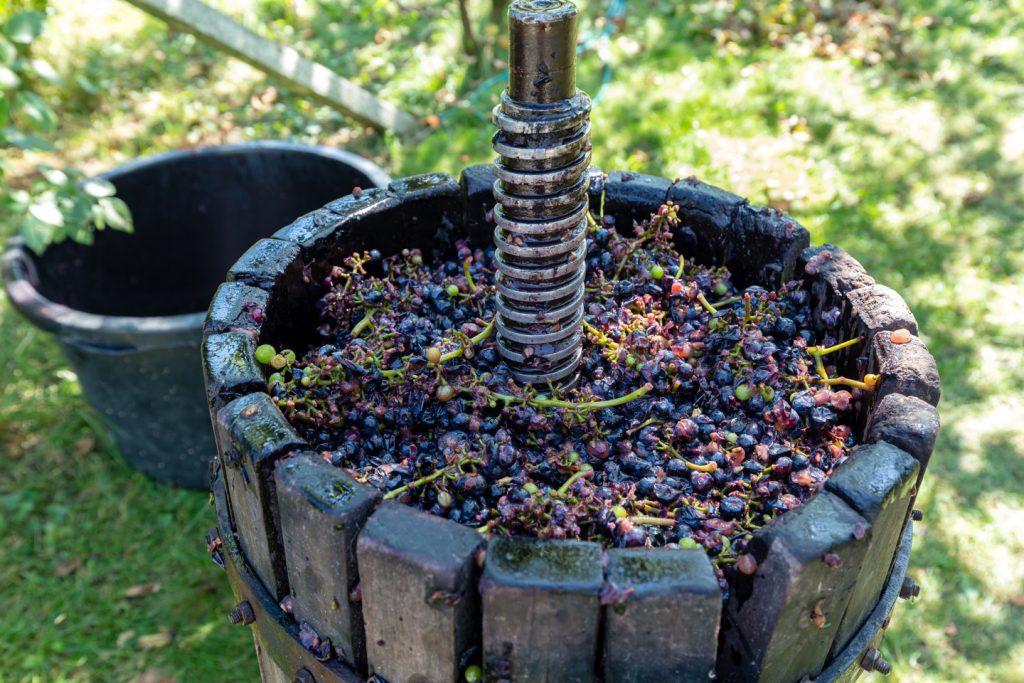 歴史ある旧世界ワイン。旧世界ワインについて徹底解説!