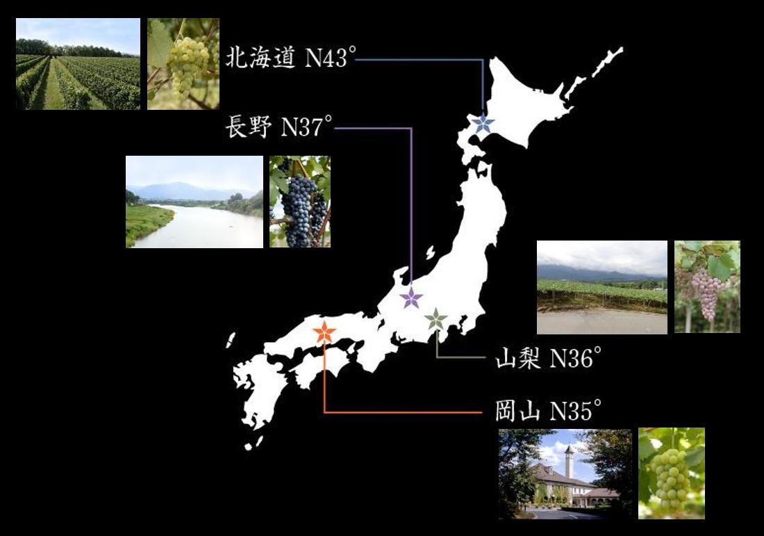 グランポレールの4つの産地を表す日本地図
