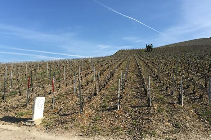 フランスのワイン畑