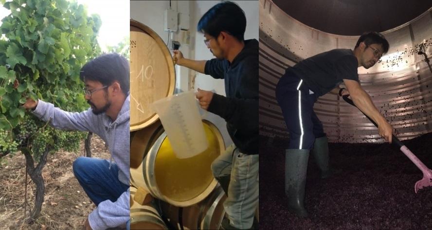 フランス国家認定ワイン醸造士の資格・DNOに合格したグランポレール ワインメーカー多田淳の留学先であるボルドーのワイナリー研修でのワイン醸造の様子