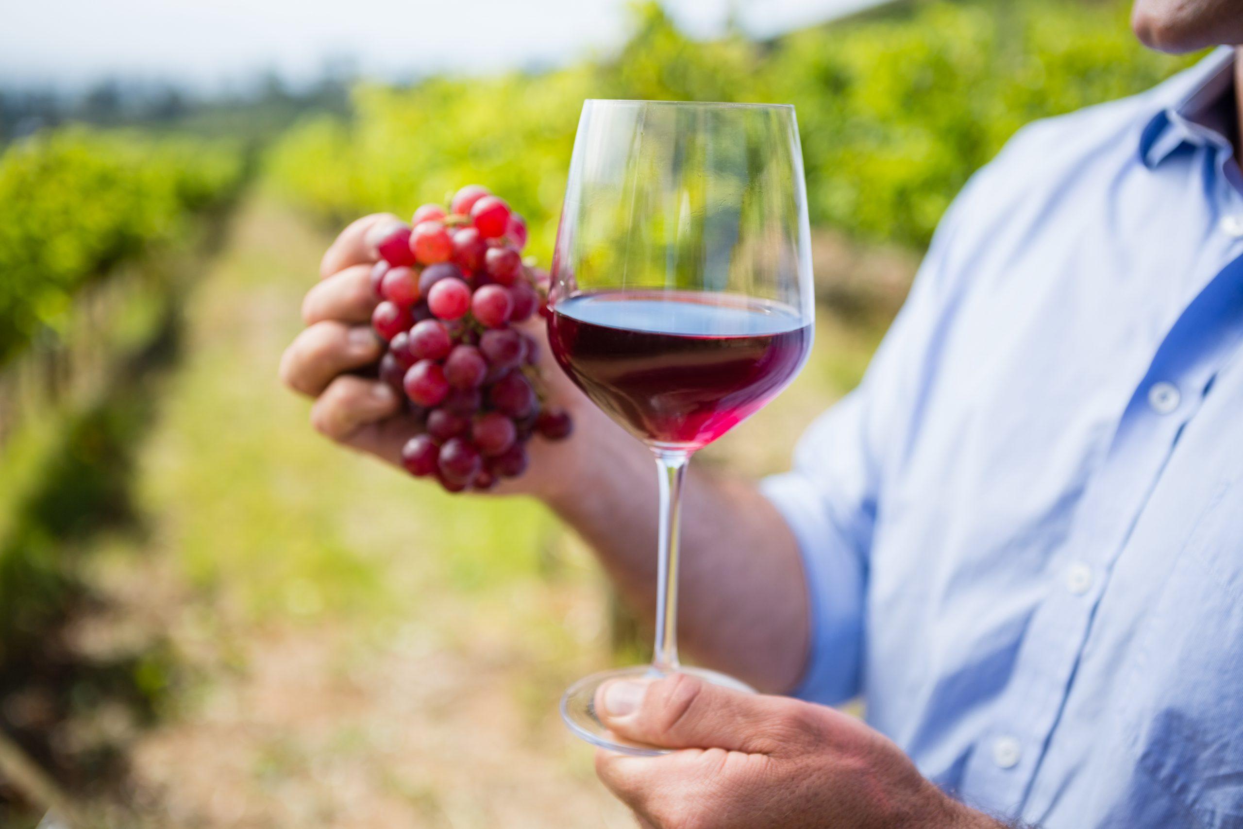 自然派ワインは地球に優しいワイン! 自然派ワインの基礎知識と選び方