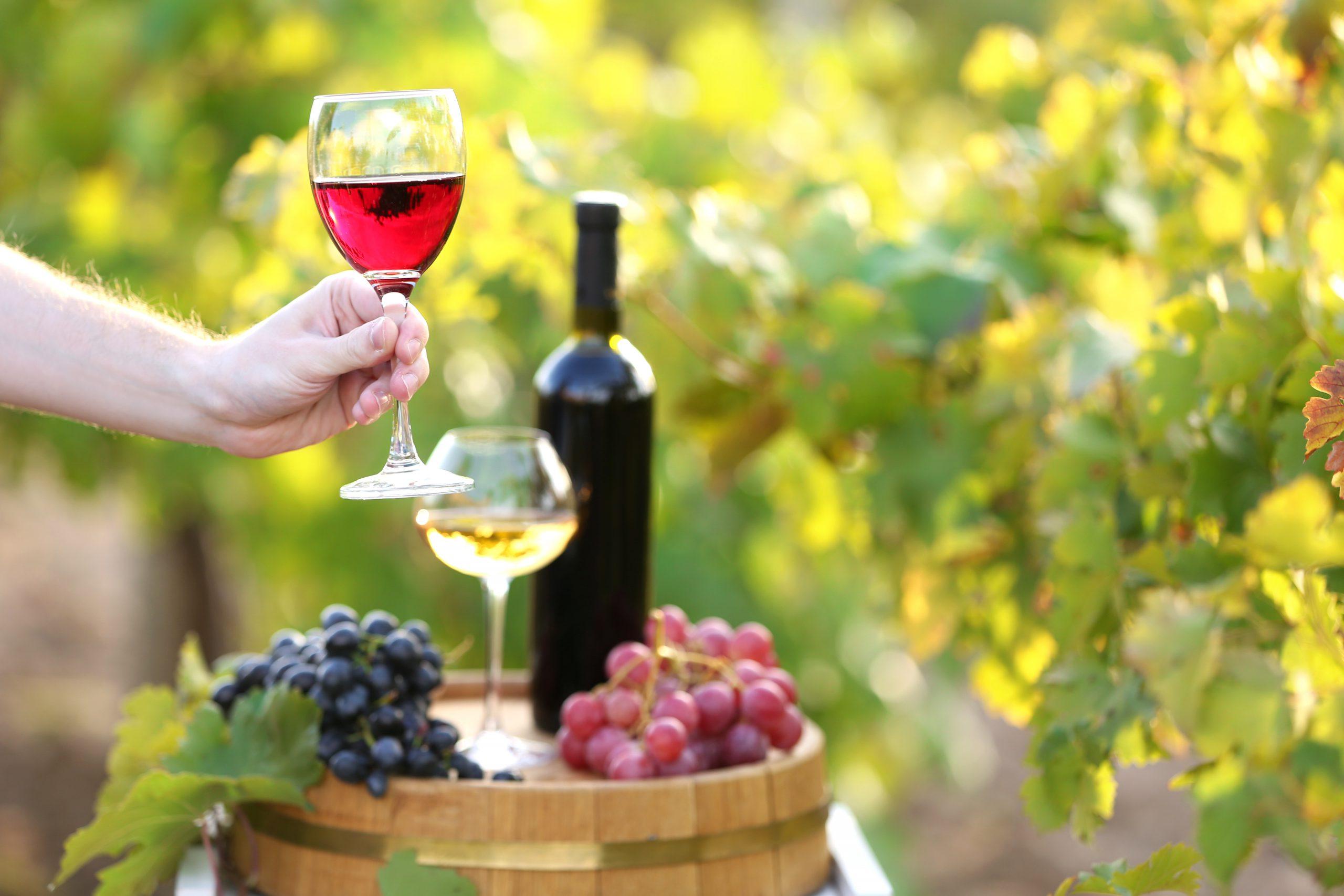 「ワイン」と「テロワール」の深遠なる関係