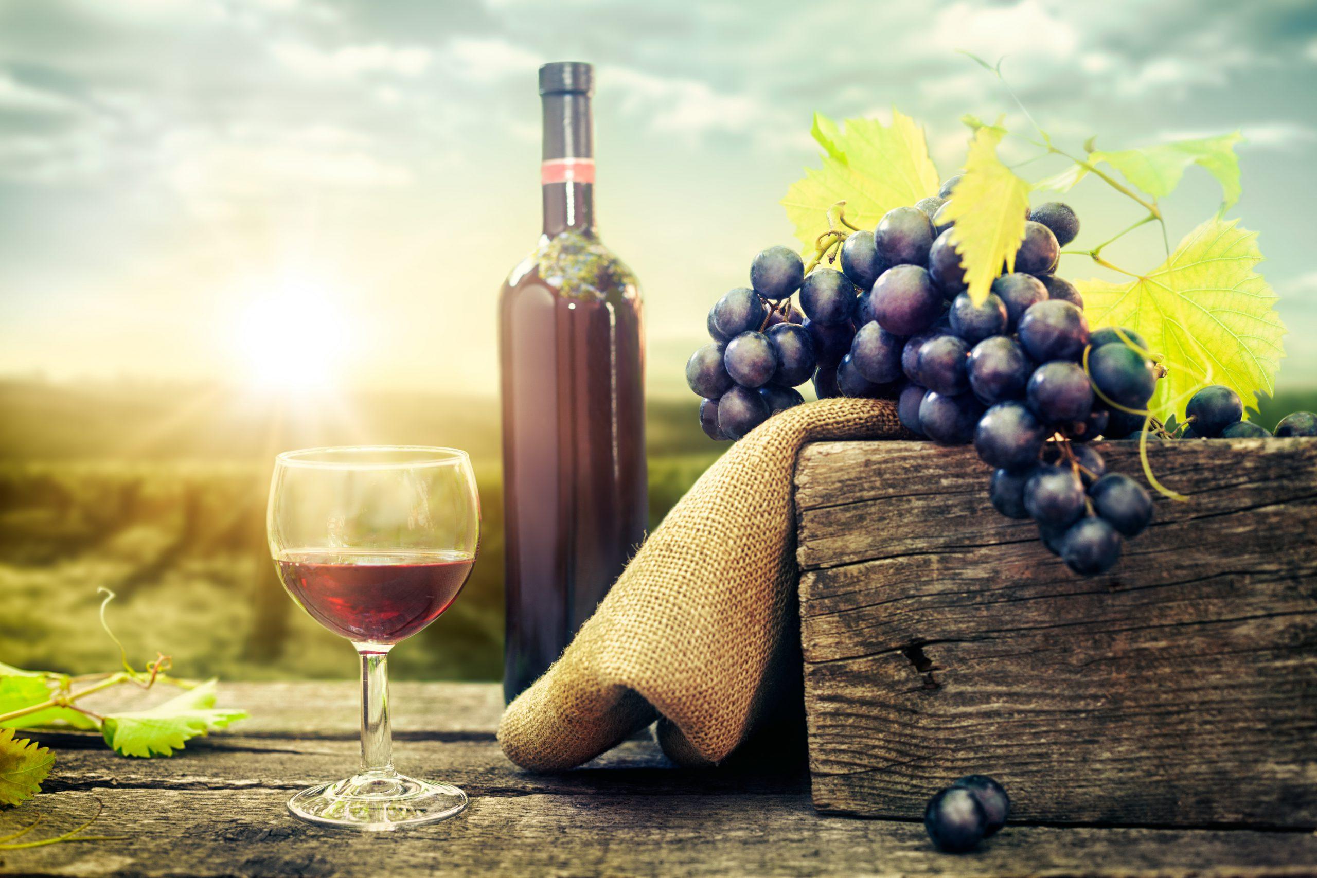 オーストラリアワインの歴史や特長を解説!その魅力とは