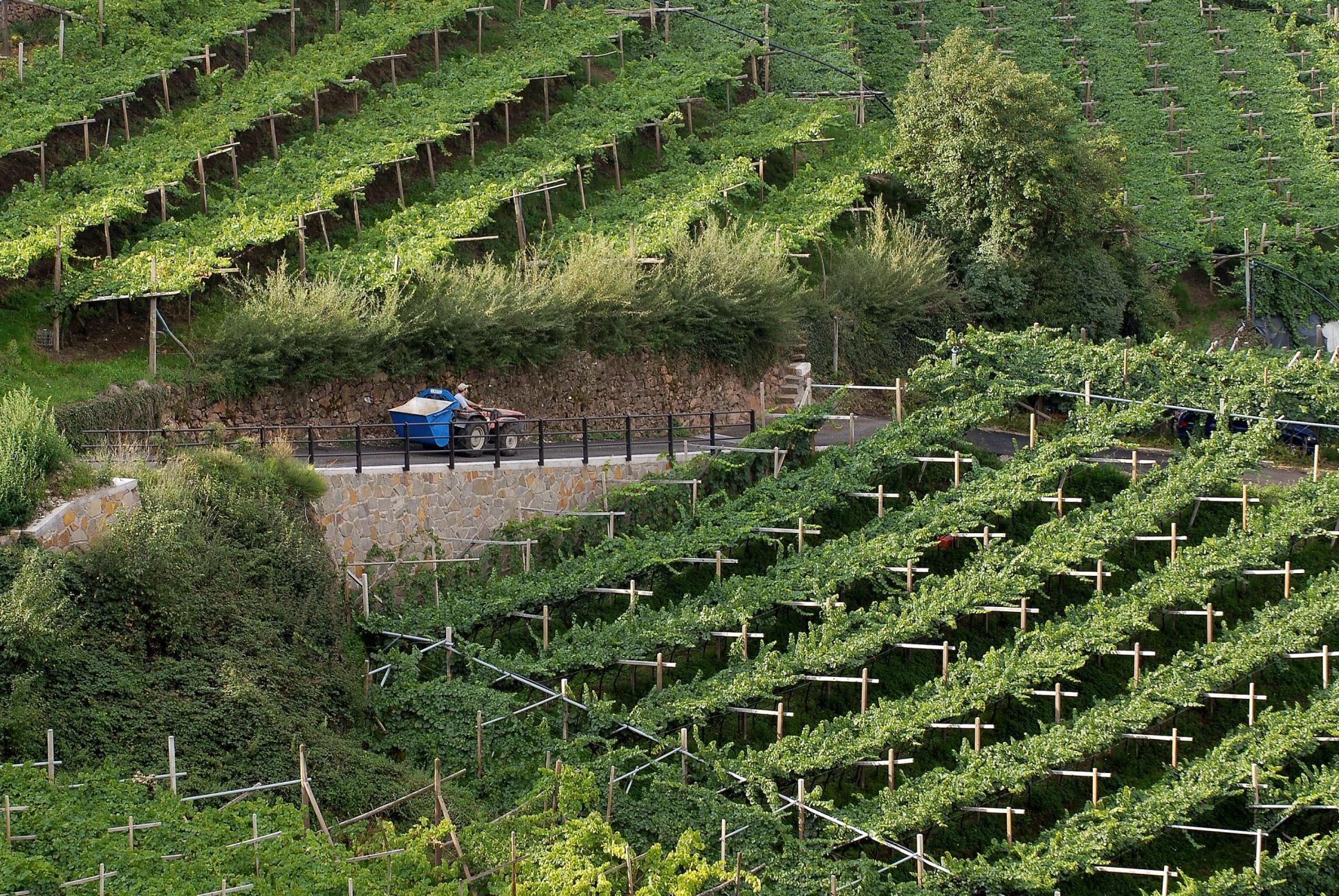 アンテッラワインの魅力って?おすすめワインと相性の良い料理をご紹介!