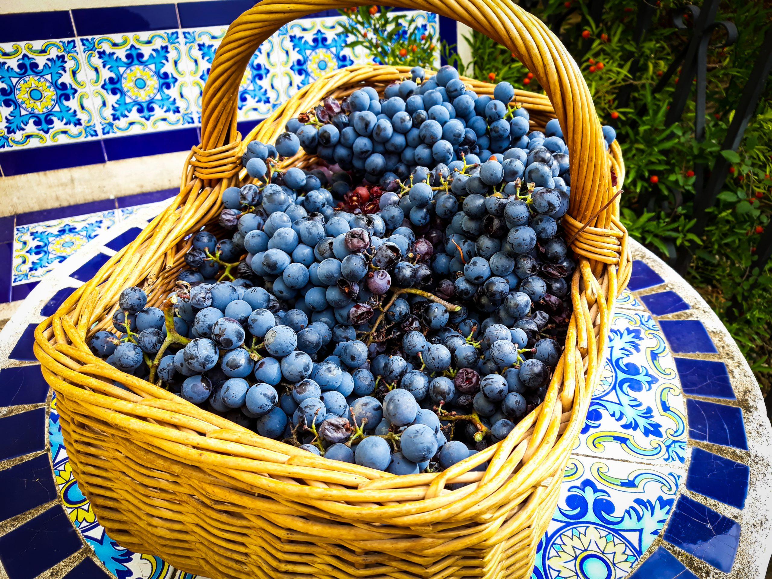 ワイン初心者にもピッタリ、「グルナッシュ」ブドウの世界と魅力