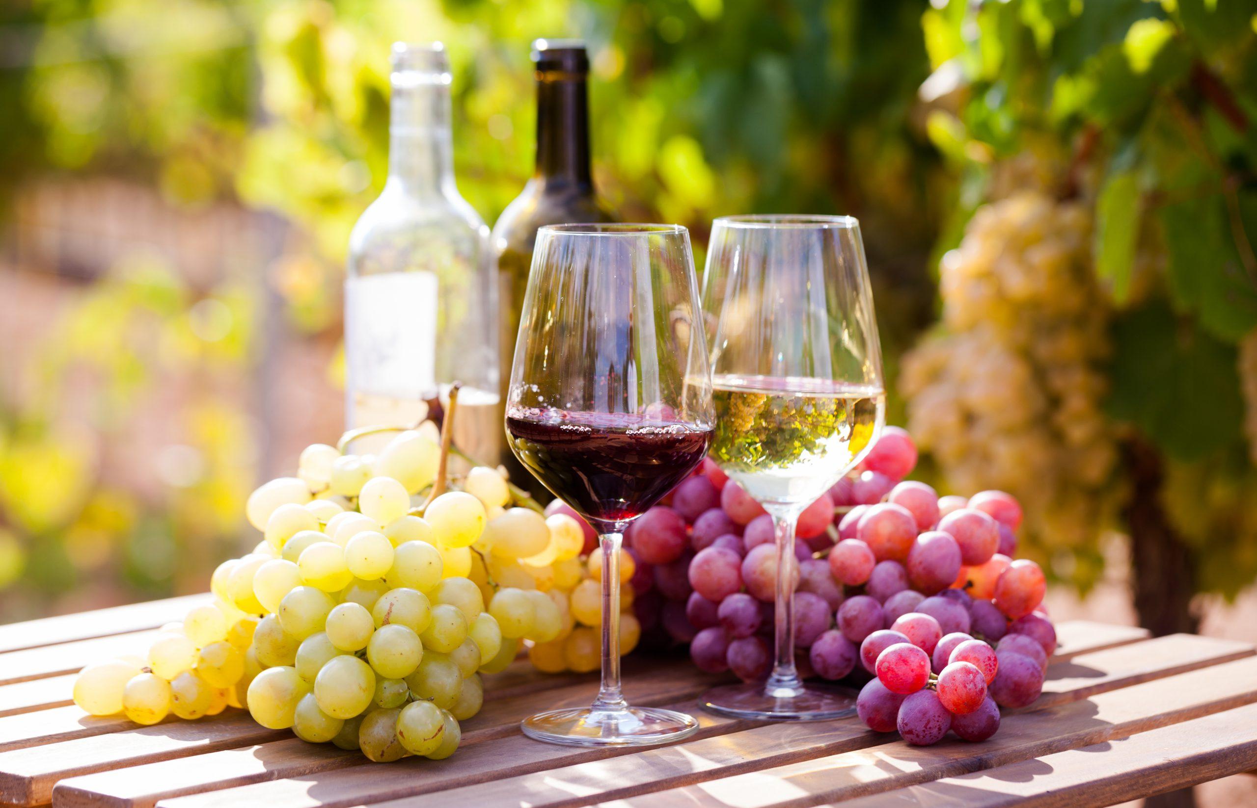赤ワインと白ワインの違いを知りたい!ブドウ品種・製法をおさえよう