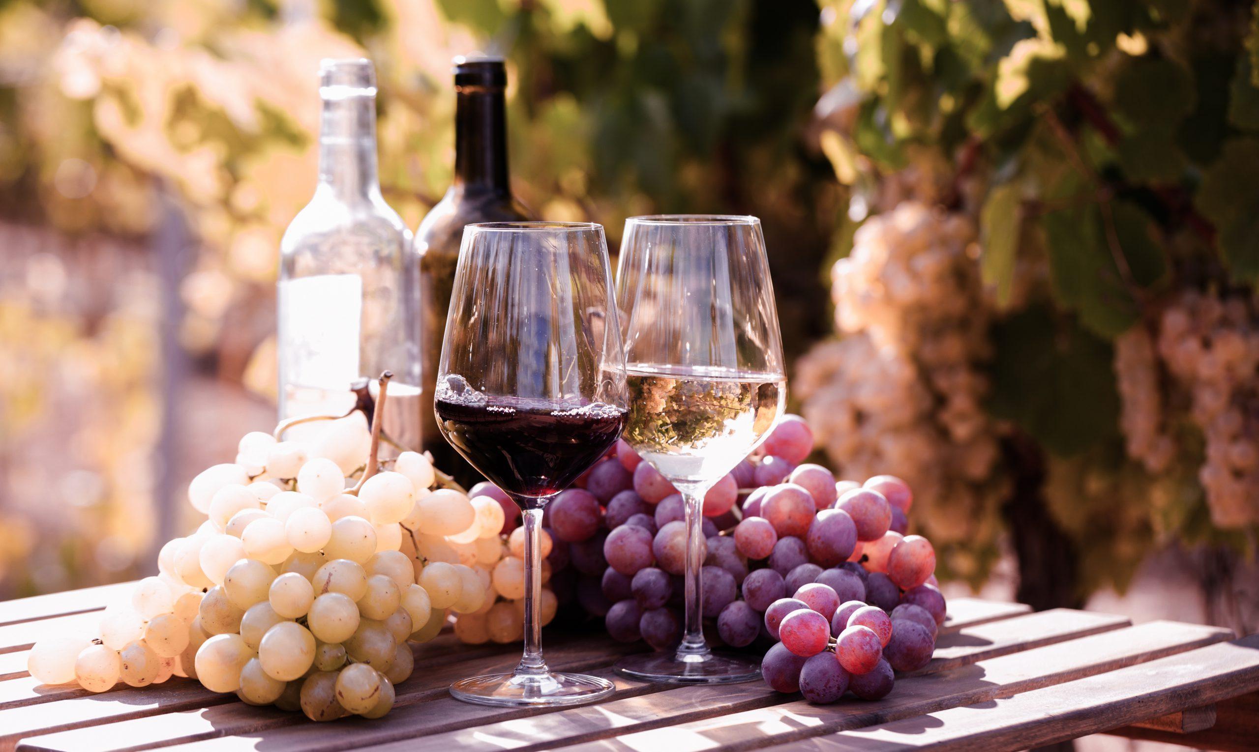 イタリアワインを知るなら地域ごとの特色をつかもう!
