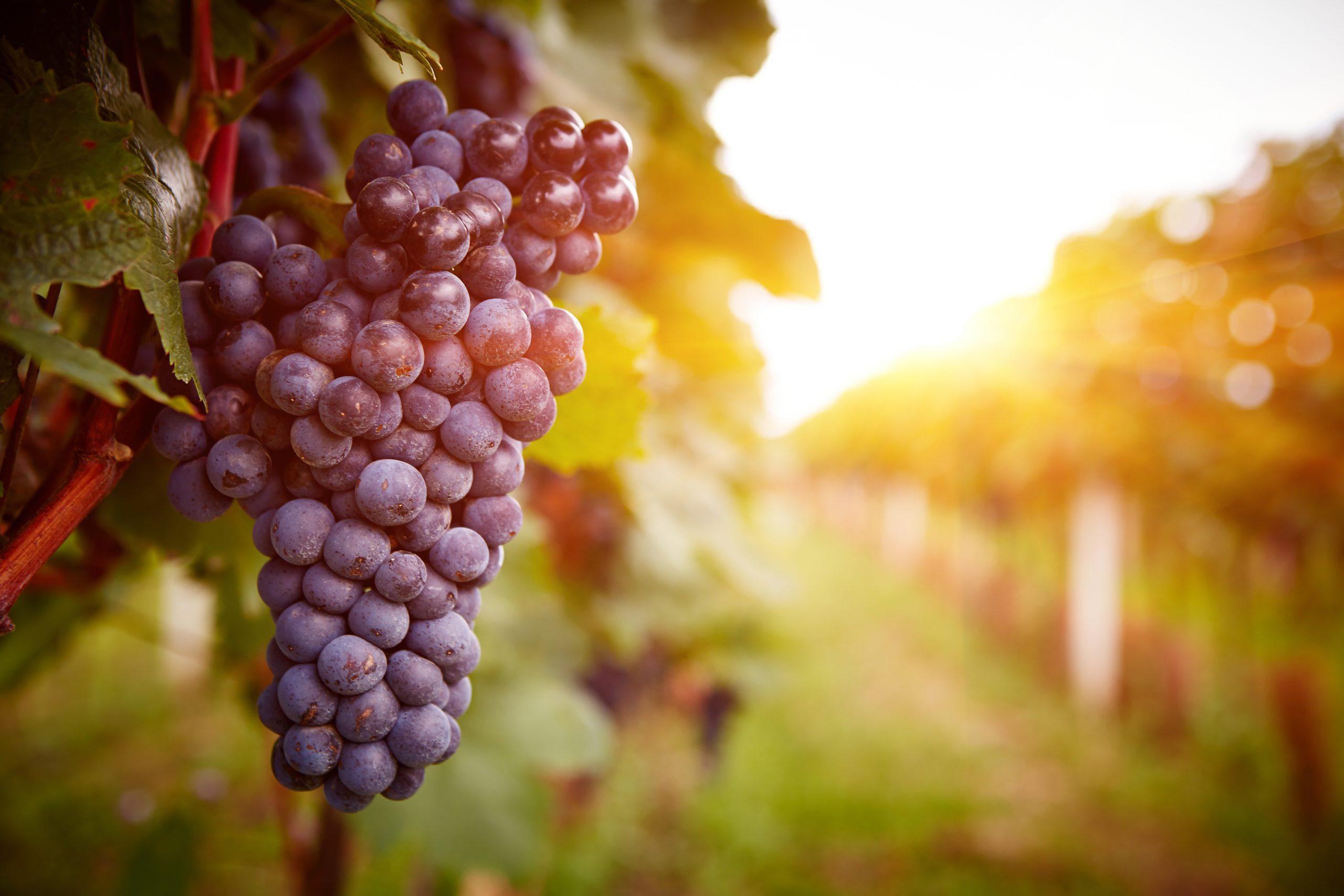 日本ワインの有名な産地